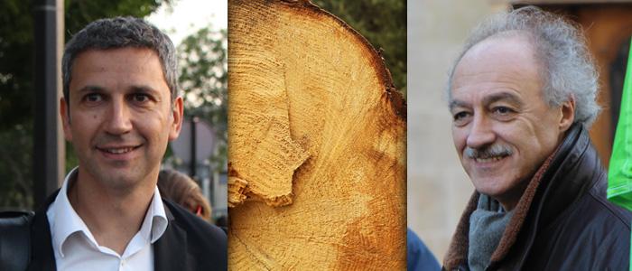 arbre-photopin-Contassot-Najdovski